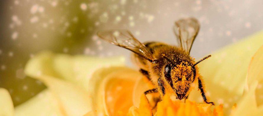 La abeja en los tiempos del coronavirus